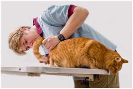 цистит у кошки симптомы лечение