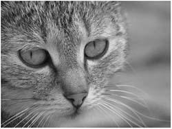цистит у кота симптомы