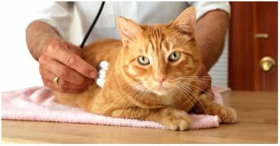 цистит у кота лечение в домашних условиях