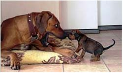 лечение послеродовой эклампсии у собак