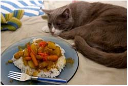кот не ест только пьёт воду вялый