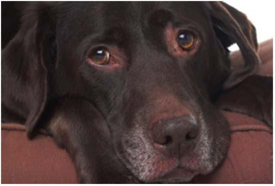 почечная недостаточность у собаки