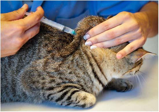 лечение ринотрахеита уколами