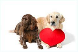 сердечная недостаточность собаки симптомы и лечение