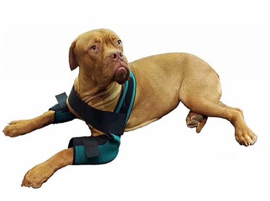 бурсит сустава у собаки
