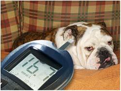 диабет у собаки гипогликемия