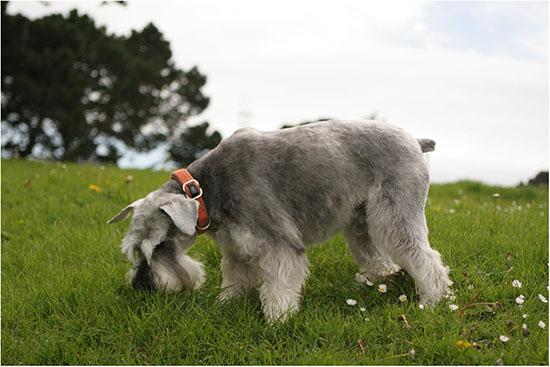 виды глистов у собак