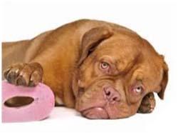 симптомы колита у собак