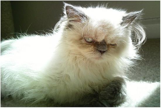 у кота лезет шерсть