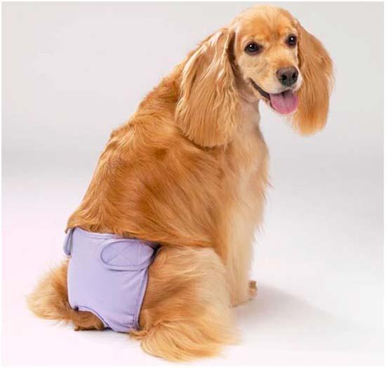 лечение недержания мочи у собаки