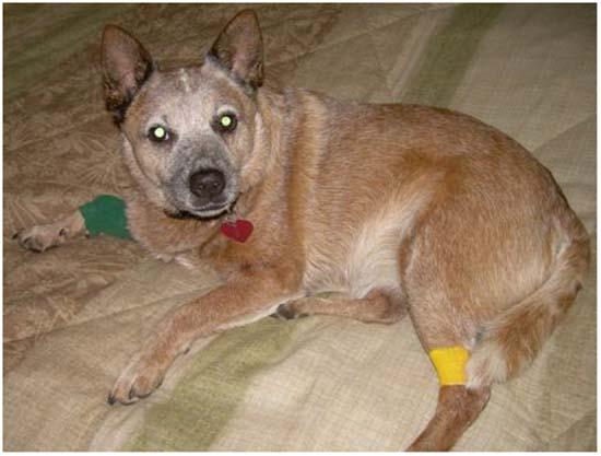 отравление у собаки симптомы лечение