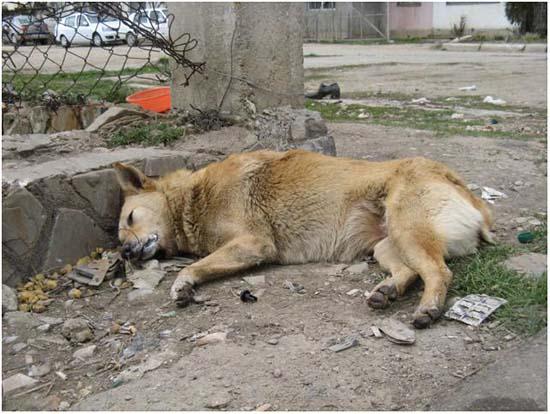 первая помощь при отравлении у собаки