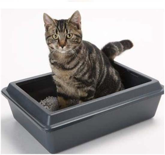 почечная недостаточность у кошек симптомы и лечение