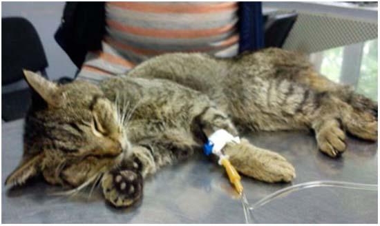 хпн у кошек лечение стадии