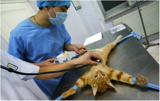 осложнения после стерилизации кошки