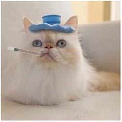 лечение насморка у кошки
