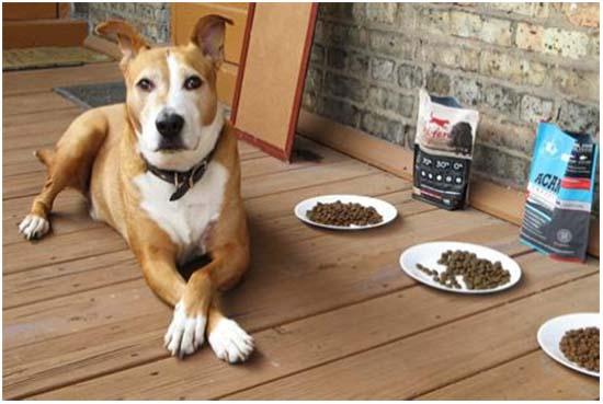 собака не ест но активная
