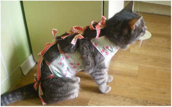 послеоперационный уход после стерилизации кошки