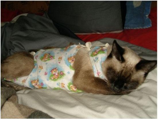 подготовить кошку к стерилизации