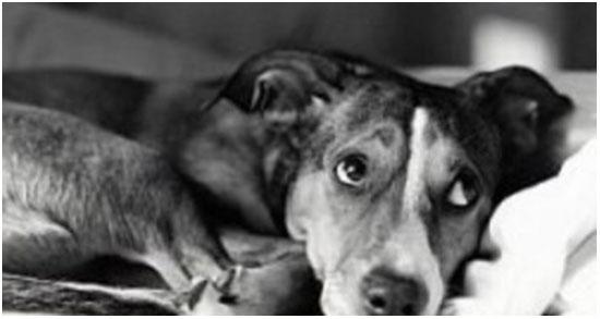энтероколит у собак симптомы и лечение