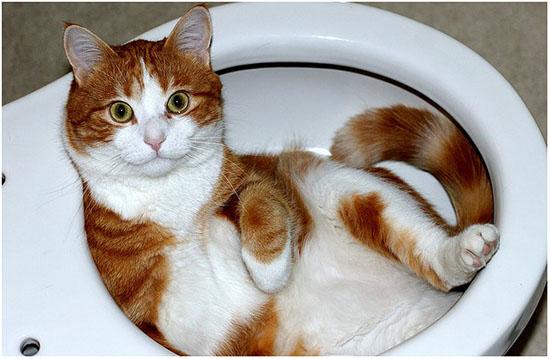 кошка не ходит в туалет после стерилизации