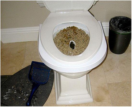 туалет для кошки после стерилизации